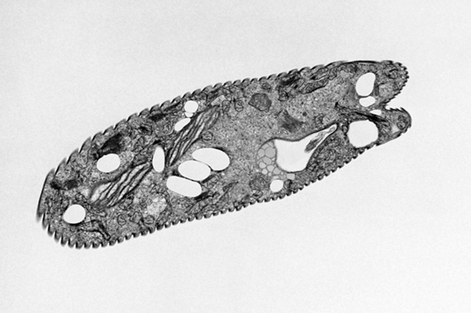 Otkriće stanice i metode istraživanja stanica u2013 biologija 1