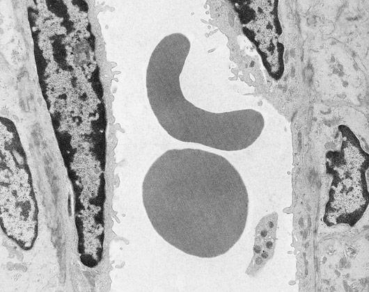 Otkriće stanice i metode istraživanja stanica u biologija
