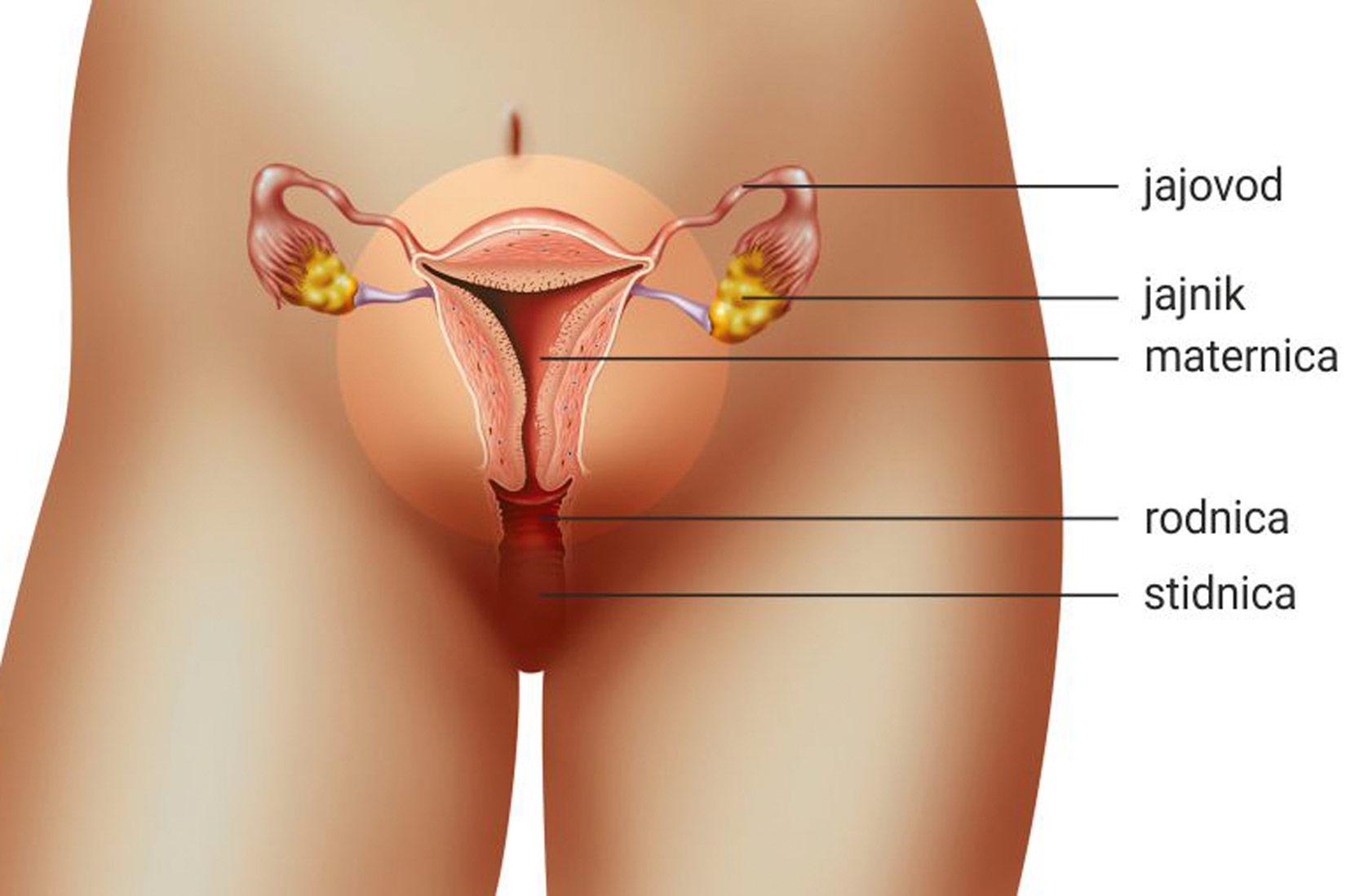 zrele žene s velikim penisima