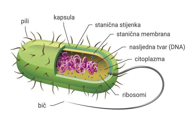 jednostavni virusi